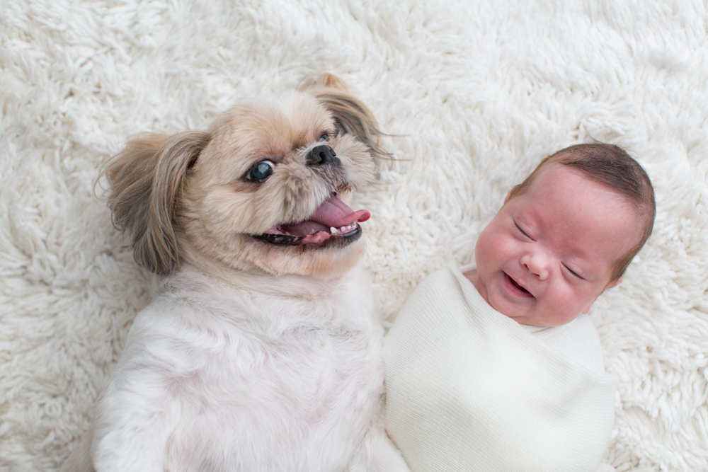Puppy and newborn laughing