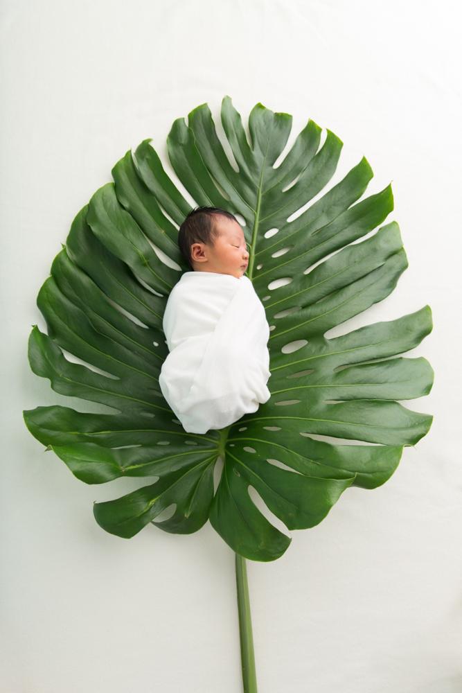 Newborn on large leaf